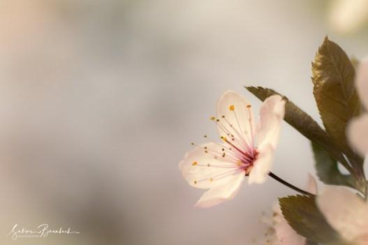 Frühling im Kinzigtal