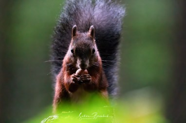 Im Eichhörnchenwald