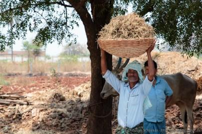 Erdnußpflücker mit seiner Ernte
