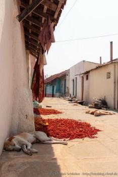 Karnatka Hund in der Mittagshitze