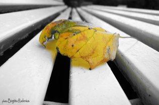 art_20120923_leaf