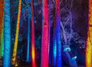 Bild von Eberhard - Winterlichter im Palmengarten