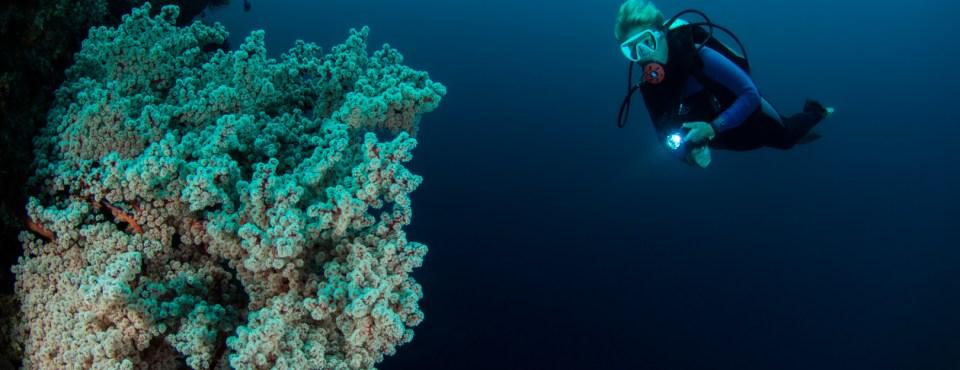 Peter Van den Eynde – Onder water in Ambon