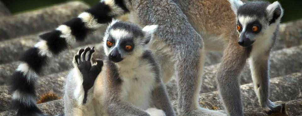 Luc Verschaeren – Prachtige dieren
