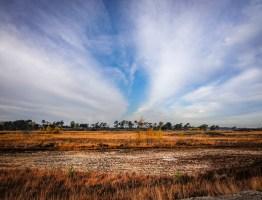 Chris Luyckx – Herfstbeelden : heide kalmthout