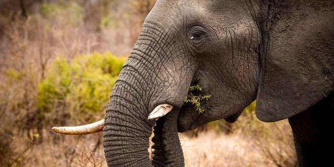 Luc Verschaeren – Wonderbaarlijke natuur in Afrika