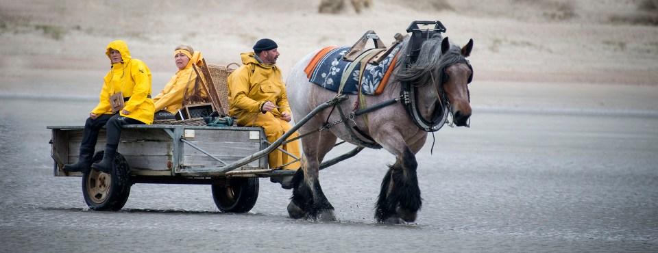 Chris Luyckx – Garnaalvissers te paard