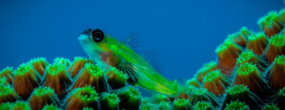 Peter Van den Eynde – Onder water in St. Eustatius