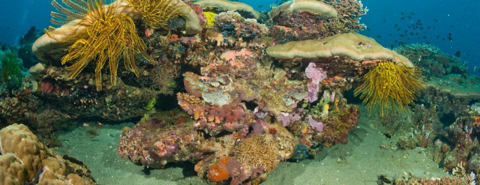 Alidoor Dellafaille – Onderwaterfotografie