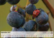 Kalender_09_Sep15