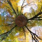 20151027-10.00 -Urwald Sababurg_lp_13302x13302_1.00x1.00(0.50)