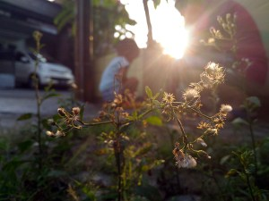 bunga bokeh backlit