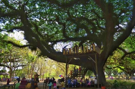 hutan de djawatan tree house
