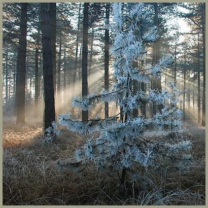 winter-205bis