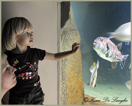 aquarium-05bis