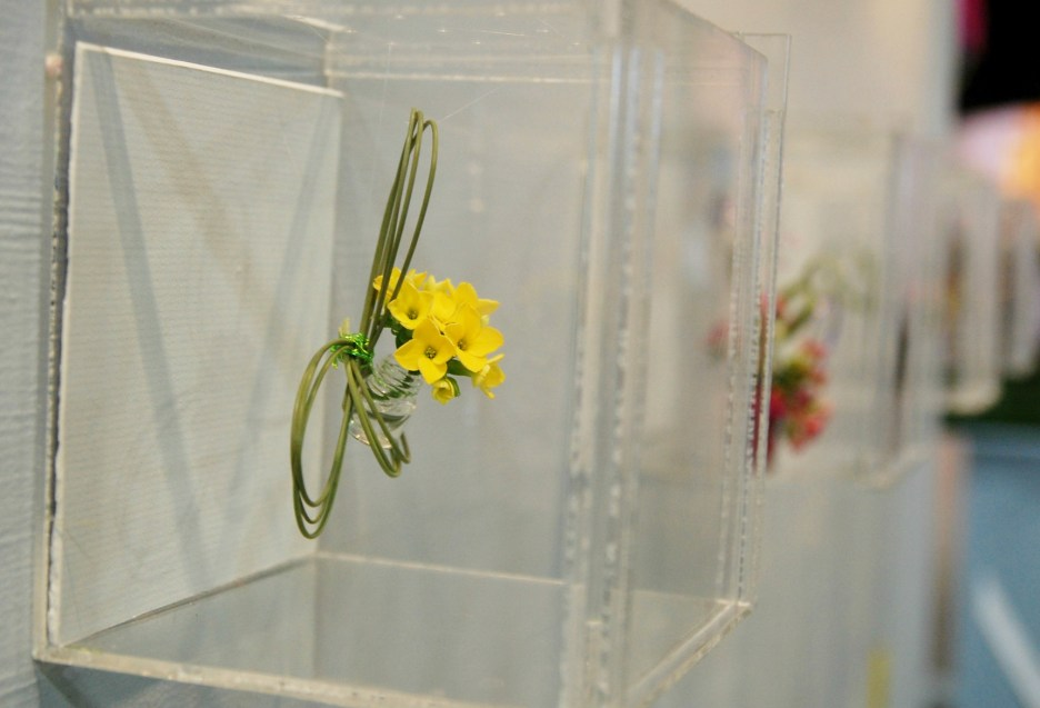tiny yellow flowers in a glass box