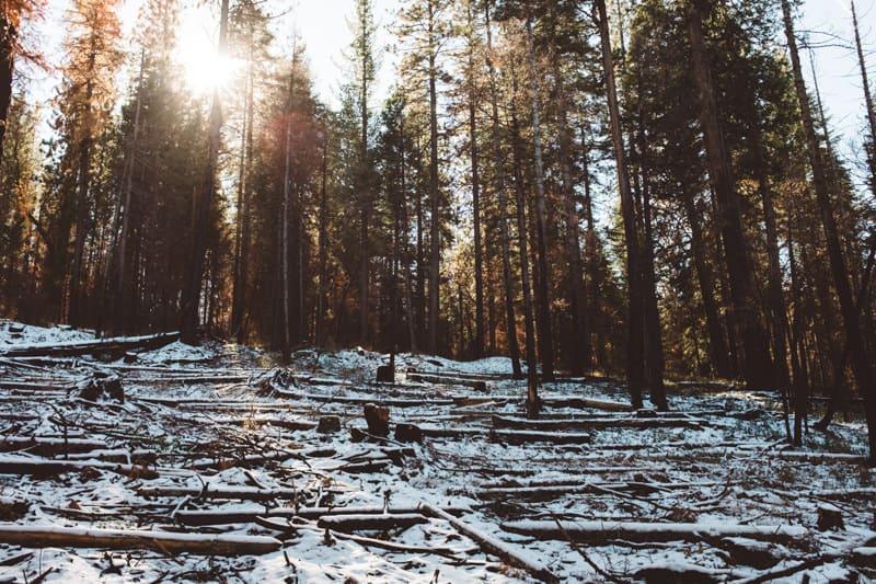 Yosemite (11 of 59)