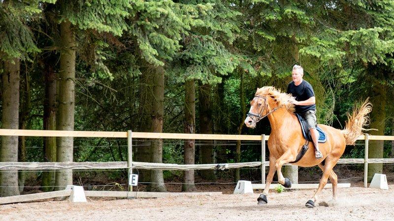 mand-på-rød-hest-i-fold