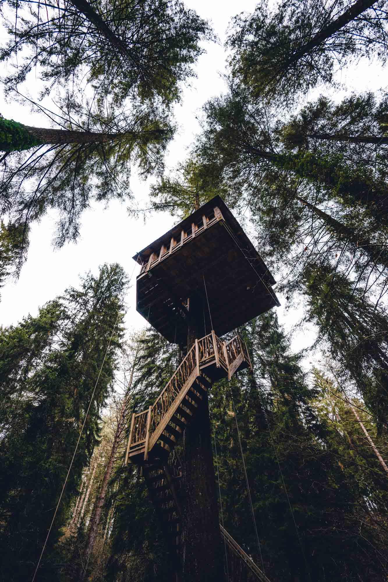 Casa del arbol en bosque - Linzex