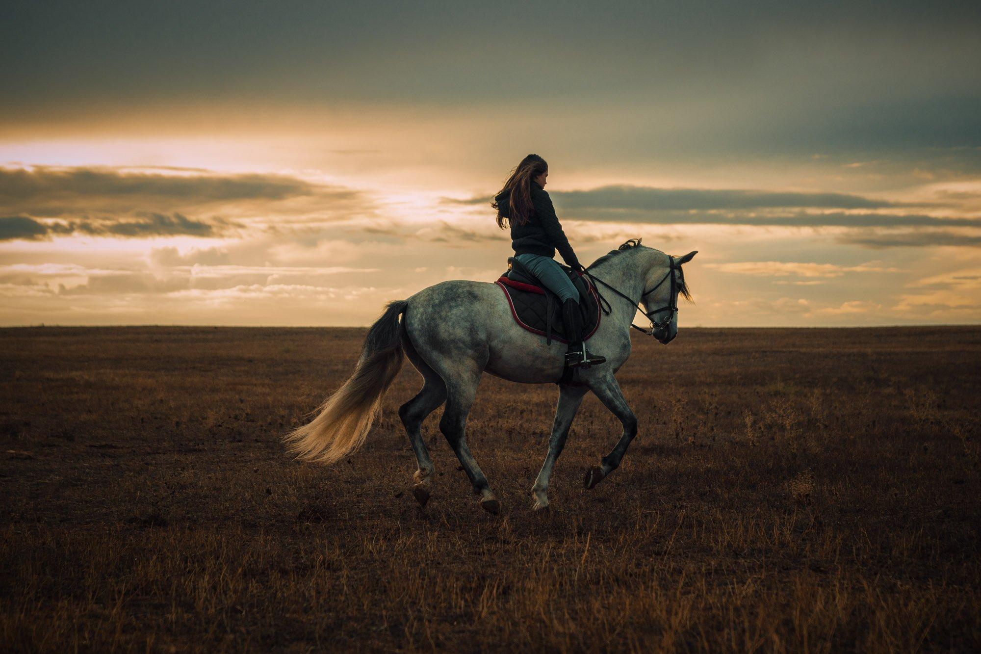 Atardecer caballo galopando - Linzex