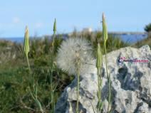 Vista da Morghella l'Isola di Capo Passero