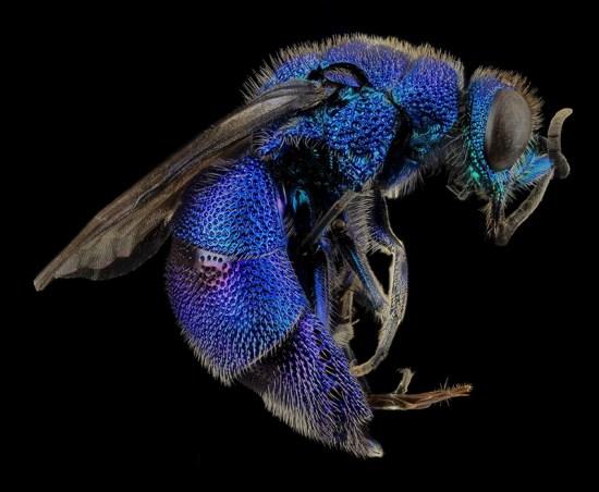 macrofotografia come scattare fotografare tecnica foto insetti e fiori