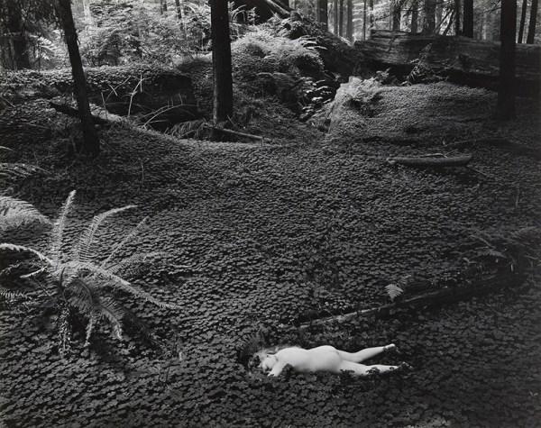 wynn-bullock fotografia foresta bianco e nero