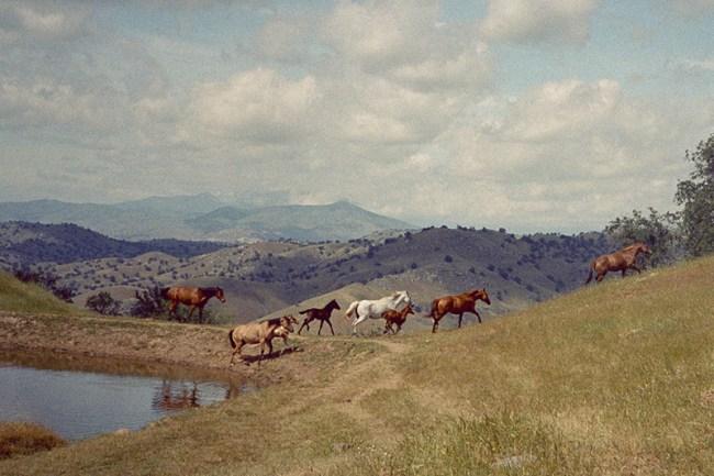 Olivia Bee fotografia paesaggio e cavalli