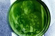 stampare fotografie su alghe