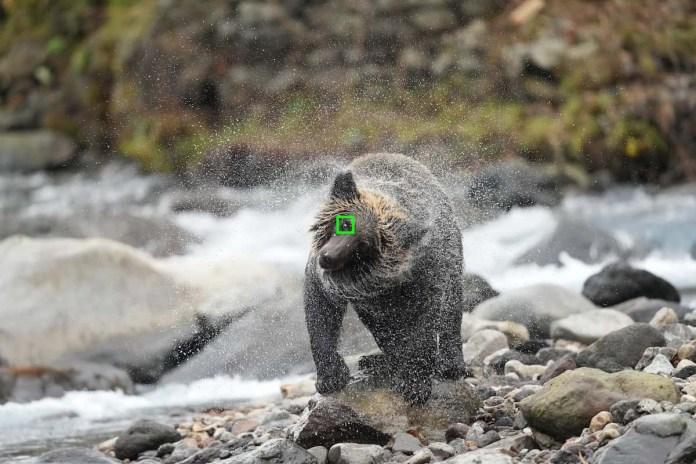 sistema tracciamento animali della fotocamera sony alpha 1