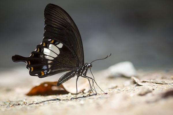come fotografare farfalle con la fotografia macro