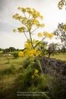 POMONA ONLUS • Associazione Nazionale per la Valorizzazione della Biodiversità - Cisternino (BR)