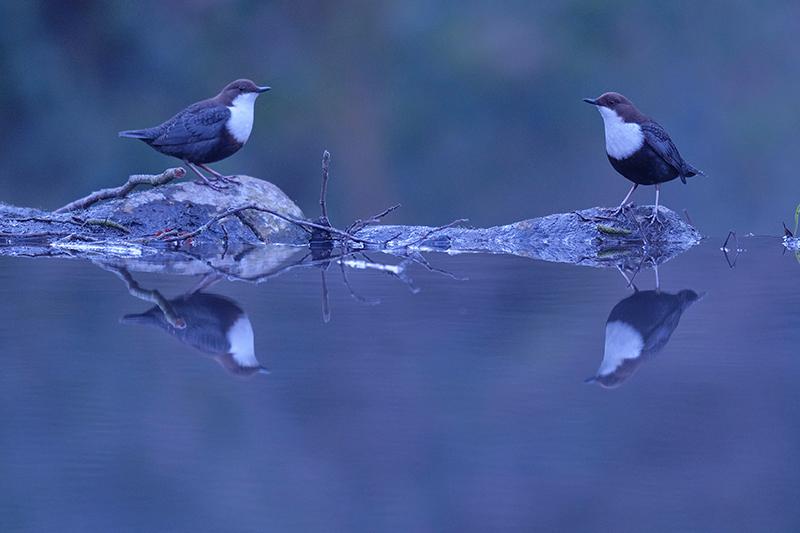 kiko-arcas-mirlos-acuaticos