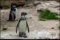 Abendführung im Zoo Berlin (Sehenswürdigkeit)