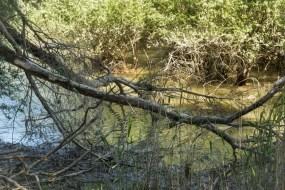 Fehlen bloss die Mangroven