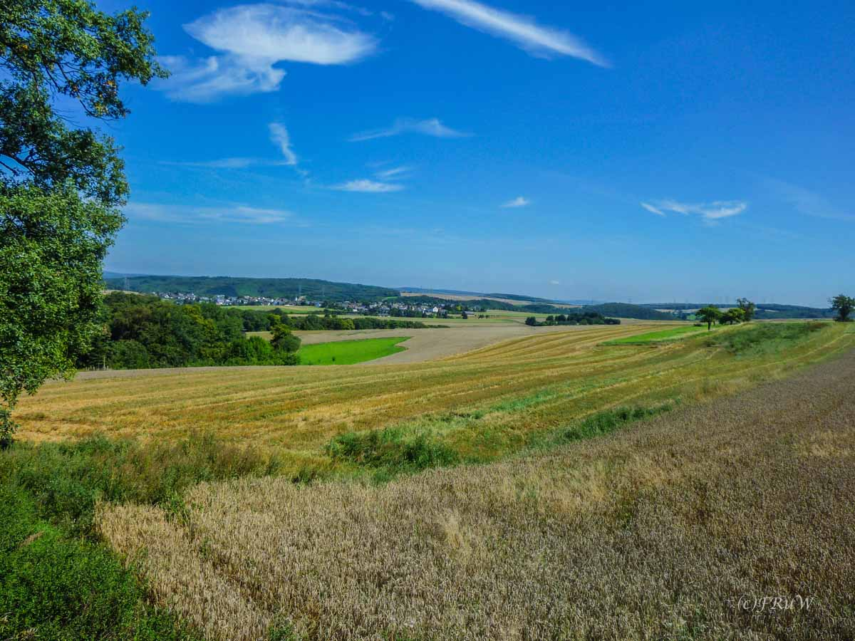 Getreidefelder in der Eifel