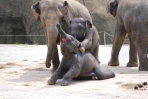07 06 Zoo Köln 239