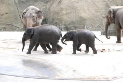 07 06 Zoo Köln 270