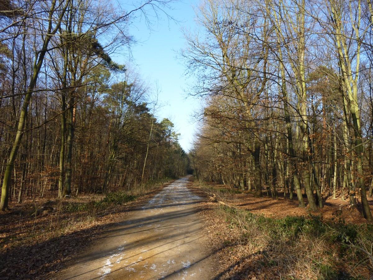 Lange Strecke geradeaus im Wald