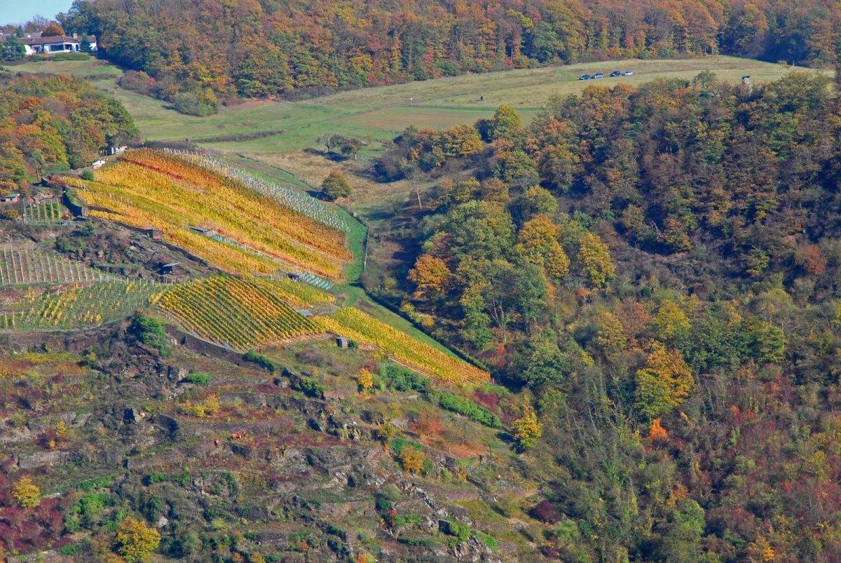 Orange Punkte im Berg - Wanderschnecken auf dem Rheinburgenweg