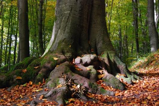 Hexenroute - Baumfuß