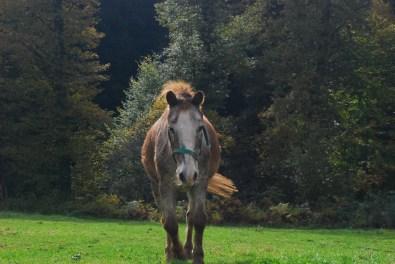 Hexenroute Pferd