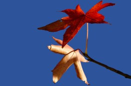 Blätter auf Blau