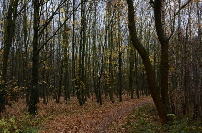 Waldwald
