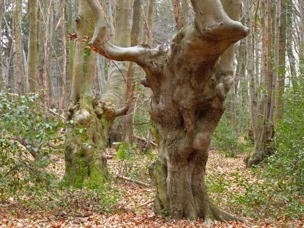 KnorrigeBäume