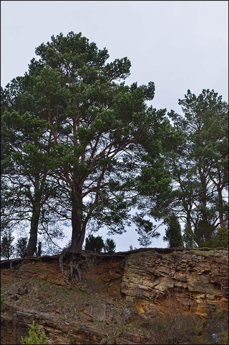 Bäume suchen überall Halt
