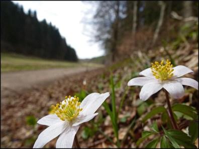 Ripsdorf-Lambertstal-Kalvarienberg Blumen (8)