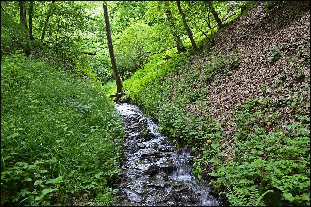Der Ehrbach führt viel Wasser