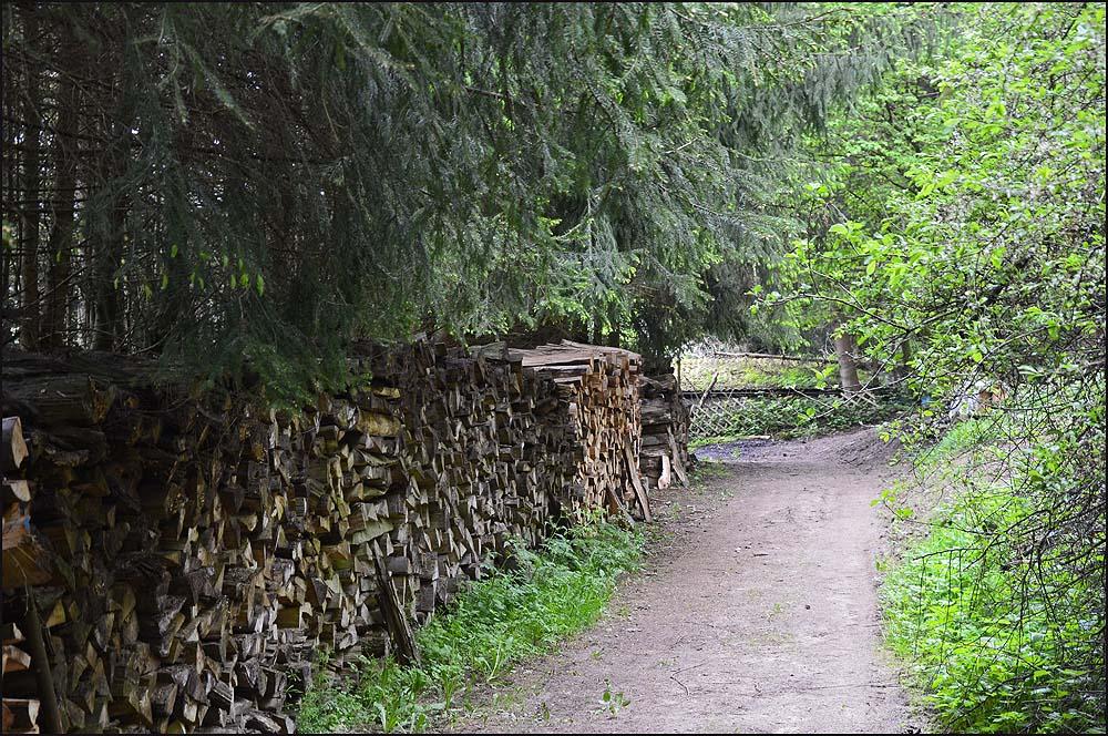 Tannenwald begleitet zunächst unseren Weg