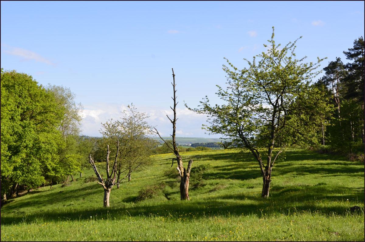 Eifelsteig-(319)